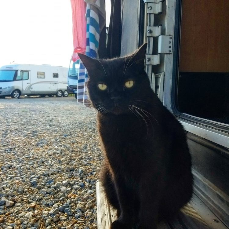This image has an empty alt attribute; its file name is theodore-van-life-cat-portugal.jpg